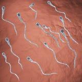 Sperma di nuoto illustrazione vettoriale