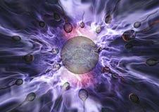 Sperma en ei Royalty-vrije Stock Afbeeldingen
