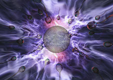 sperma jajeczna Obrazy Royalty Free