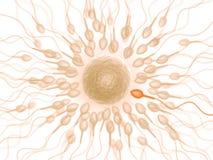 Sperma (Leiding) stock fotografie