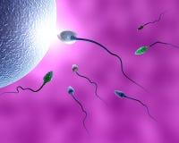Sperma umano Fotografie Stock Libere da Diritti