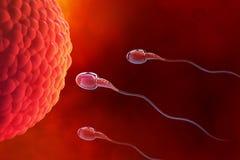 Sperm and egg cell. Natural fertilization. 3d illustration on red background. Spermatazoids, Egg, Ovule, natural fertilization. 3d illustration on a medical stock illustration