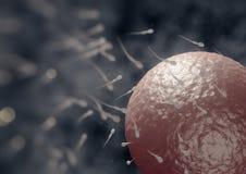 Spermatozoa. 3d illustration of spermatozoa fecundating an ovule Stock Images