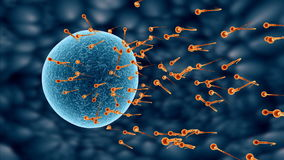 spermatozoa vector illustration
