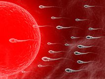 Spermatozoon, floating to ovule. 3d Spermatozoon, floating to ovule Stock Image