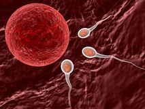 Spermatozoons, floating to ovule. 3d Spermatozoons, floating to ovule Royalty Free Stock Image