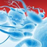 Sperme allant pour l'oeuf Images stock