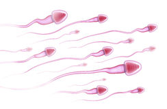 Sperms running to the egg Stock Photos
