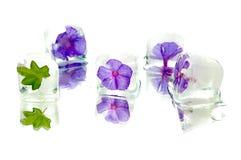 Sperren Sie Blume ein Stockbild
