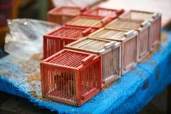 Sperren Sie den Vogel für Freigabe im Verdienst von Thailand ein Stockfoto