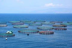 Sperren Sie Lachs- Bauernhof in Süd-Chile, Fisch ein Lizenzfreies Stockfoto