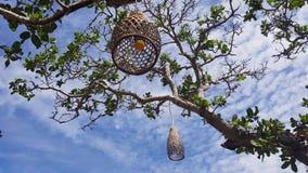 Sperrt die Lampen ein, die Dekorationen auf dem Baum hängen stock video footage