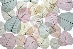 Spets- bakgrund av torkade höstsidor i mjuka pastellfärgade färger på Arkivbild
