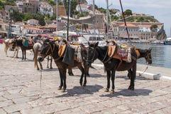 Spetses ö, Grekland mulor för trans. av folk och produkter i Spetses royaltyfri foto