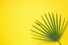 Spetsigt runt palmträdblad på ljusa gula Sunny Background Garnering för rumväxtinre Skraj stil för Hipster arkivfoton