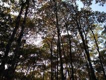 Spettacolo di luci in una foresta immagine stock