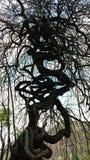 Spettacular tree  Italy Royalty Free Stock Photos