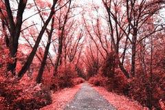 Spettro infrarosso Fotografia Stock
