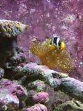 Spexa fisken Arkivfoton