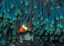 Spexa fisken Arkivbild