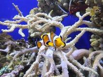 Spexa fisken Royaltyfri Bild
