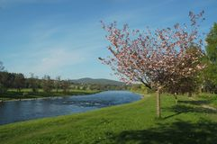 Spey valley in spring. At aberlour in scotland Royalty Free Stock Image