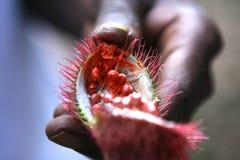 Spezia di Zanzibar Fotografia Stock Libera da Diritti