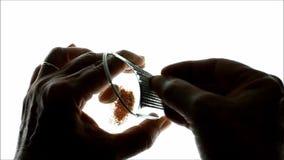 Spezia stridente del seme della noce moscata archivi video