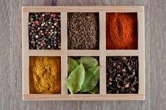 Spezie in cummin della scatola, pepe, laurer, curry, paprica, peperoncino rosso Immagine Stock Libera da Diritti