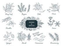 spezie disegnate a mano Erbe e verdure indiane dell'alimento, ingredienti italiani ed asiatici, timo del peperoncino rosso e vett illustrazione vettoriale