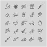 Spezie e linea icone dei condimenti Fotografia Stock Libera da Diritti