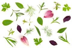 Spezie ed erbe fresche su fondo bianco Aglio del tarhun del timo di basilico del prezzemolo dell'aneto Vista superiore Fotografia Stock Libera da Diritti