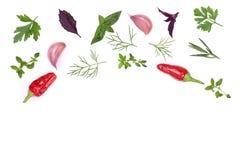 Spezie ed erbe fresche su fondo bianco con lo spazio della copia per il vostro testo Vista superiore del timo di basilico del pre Immagini Stock