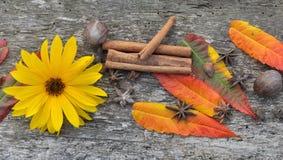 Spezie, foglie e fiore Fotografia Stock Libera da Diritti