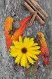 Spezie, foglie e fiore Fotografie Stock Libere da Diritti