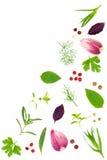 Spezie fresche ed erbe isolate su fondo bianco Aglio dei granelli di pepe del tartun del timo di basilico del prezzemolo dell'ane Fotografia Stock Libera da Diritti