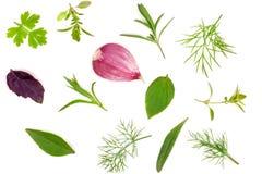 Spezie fresche ed erbe isolate su fondo bianco Aglio del tarhun del timo di basilico del prezzemolo dell'aneto Vista superiore Immagini Stock Libere da Diritti