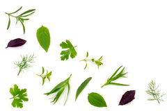 Spezie fresche ed erbe isolate su fondo bianco Dragoncello del timo di basilico del prezzemolo dell'aneto Vista superiore Immagine Stock Libera da Diritti