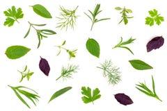 Spezie fresche ed erbe isolate su fondo bianco Dragoncello del timo di basilico del prezzemolo dell'aneto Vista superiore Fotografia Stock