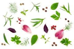 Spezie fresche ed erbe isolate su fondo bianco Parsle dell'aneto Immagine Stock Libera da Diritti