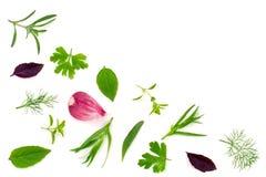 Spezie fresche ed erbe isolate su fondo bianco Parsle dell'aneto Fotografia Stock Libera da Diritti
