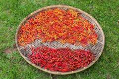 Spezie - pepe di peperoncini rossi rovente secco dei peperoncini rossi Fotografia Stock Libera da Diritti