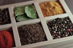 Spezie in scatola: cummin, pepe, laurer, curry, paprica, peperoncino rosso Fotografia Stock