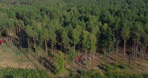 Spezielle Ausrüstung der Abholzung, Ansicht vom Brummen Die Arbeit von Walderntemaschinen Holzschlag des dichten Kiefernwaldes stock video footage