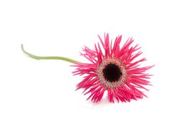 spezielle Blume lizenzfreie stockfotos