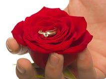 Spezielle Blume für eine spezielle Person Lizenzfreie Stockfotos