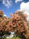Spezielle Blumen Stockbild