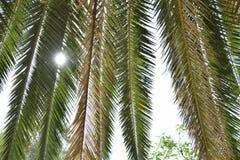 Spezielle Palme lizenzfreies stockfoto