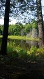 Spezielle Stelle im Wald Stockfotografie
