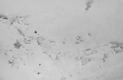 Spezieller Sepia getont, f/x Lizenzfreies Stockbild